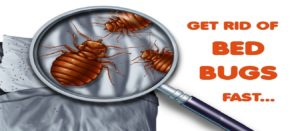 pest-control-services-dubai
